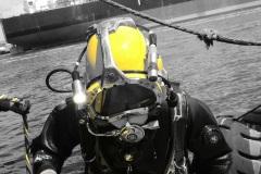 duiker-2